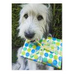 Perro con el regalo en boca postales