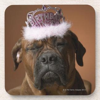 Perro con la corona del cumpleaños en la cabeza posavasos de bebidas