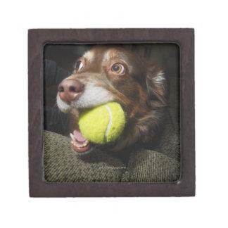 Perro con la pelota de tenis cajas de recuerdo de calidad