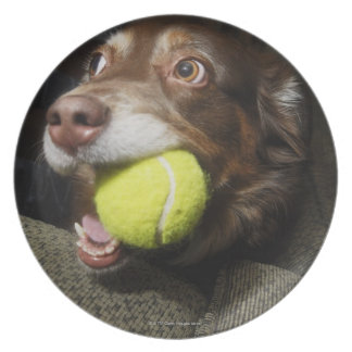 Perro con la pelota de tenis plato para fiesta