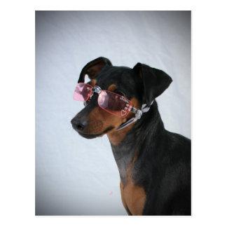 Perro con las gafas de sol rosadas tarjetas postales