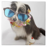 Perro con las gafas de sol y el postre helado azulejo cuadrado grande
