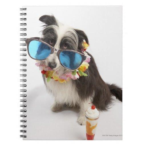 Perro con las gafas de sol y el postre helado libros de apuntes