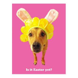 Perro con los oídos del conejito postal