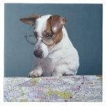 Perro con los vidrios de lectura que estudia el ma tejas