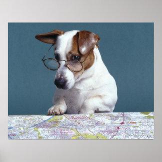Perro con los vidrios de lectura que estudia el ma posters