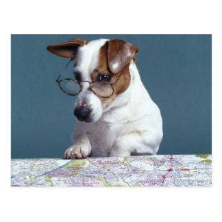 Perro con los vidrios de lectura que estudia el postales