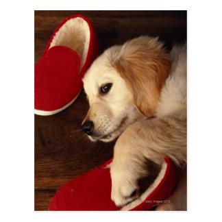 Perro con los zapatos que mienten en el piso de ma tarjetas postales
