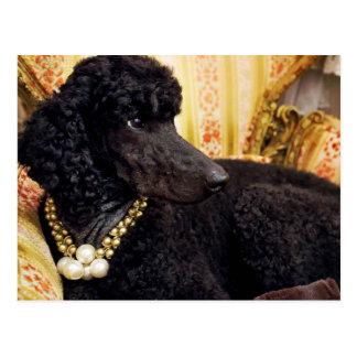 Perro con un collar de la perla postales