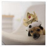 Perro con una corona azulejo cerámica