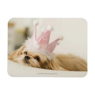 Perro con una corona imán