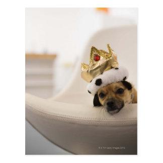 Perro con una corona tarjetas postales