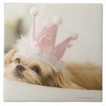 Perro con una corona teja cerámica