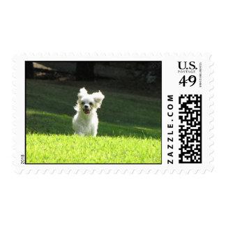 Perro corriente sello postal