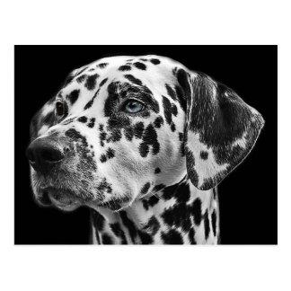 Perro dálmata blanco y negro tarjetas postales