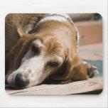 perro de afloramiento cansado alfombrillas de ratón