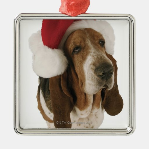 Perro de afloramiento en el gorra de Santa Adorno Para Reyes