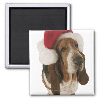 Perro de afloramiento en el gorra de Santa Imán Cuadrado