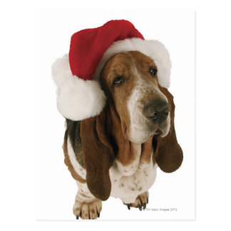 Perro de afloramiento en el gorra de Santa Postales