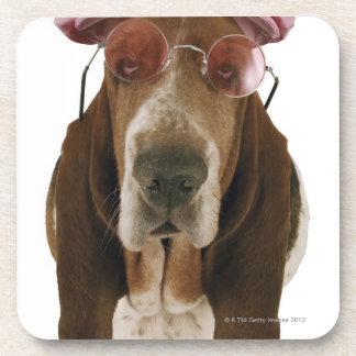 Perro de afloramiento en gafas de sol y casquillo posavaso