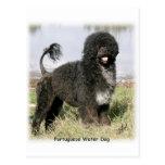 Perro de agua portugués 9Y154D-030 Tarjetas Postales