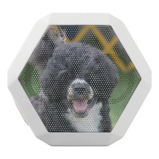 Perro de agua portugués altavoces bluetooth blancos boombot REX