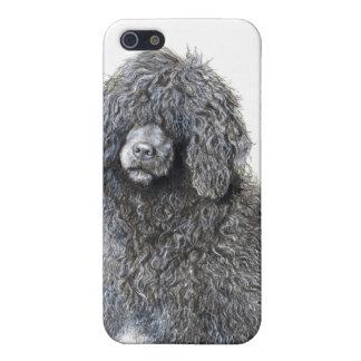 perro de agua portugués del perro del caso pedigrí iPhone 5 carcasas