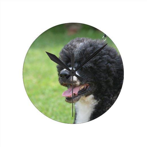 Perro de agua portugués lindo relojes de pared