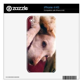 Perro de aguas de Abby Bretaña Calcomanía Para El iPhone 4