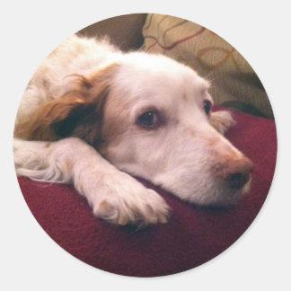 Perro de aguas de Abby Bretaña Pegatina Redonda