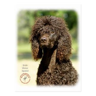 Perro de aguas de agua irlandesa 9R032D-363 Tarjeta Postal