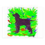 Perro de aguas de agua irlandesa tarjetas postales