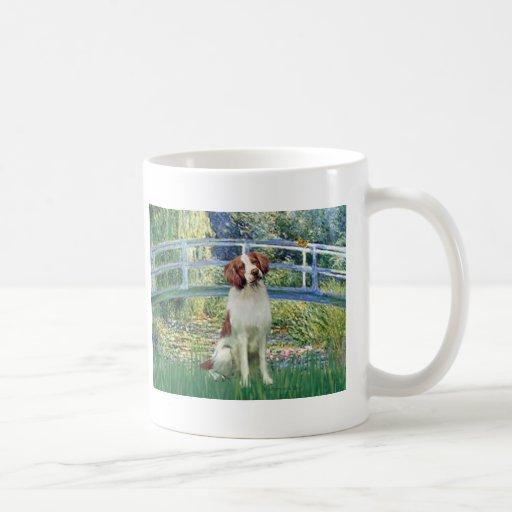 Perro de aguas de Bretaña 3 - puente Taza
