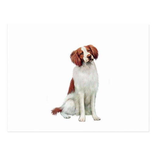 Perro de aguas de Bretaña (A).png Tarjetas Postales