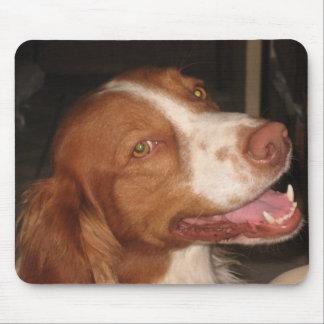 Perro de aguas de Bretaña sonriente Tapetes De Raton