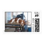 Perro de aguas de Bretaña: Tarde perezosa del Sello Postal