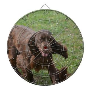 Perro de aguas de campo lindo tablero dardos
