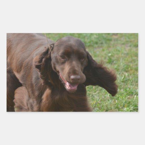 Perro de aguas de campo lindo etiquetas