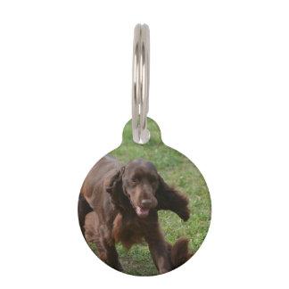 Perro de aguas de campo lindo identificador para mascotas