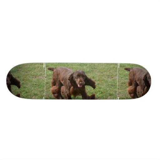 Perro de aguas de campo lindo monopatines personalizados