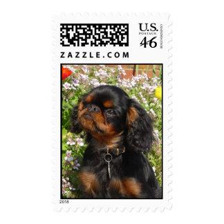 Perro de aguas de juguete inglés de los sellos/rey