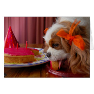 Perro de aguas de los caballeros del cumpleaños de felicitacion