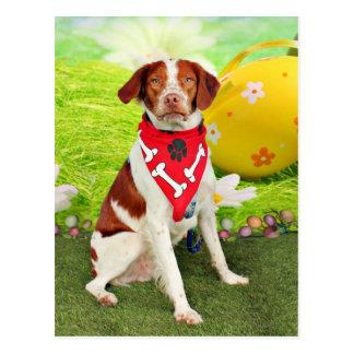 Perro de aguas de Pascua - de Bretaña - Elliott