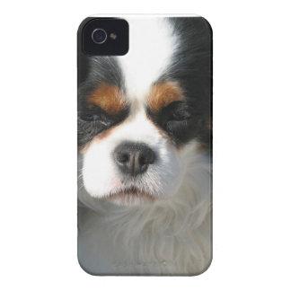 Perro de aguas de rey Charles adorable iPhone 4 Case-Mate Funda