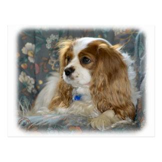 Perro de aguas de rey Charles arrogante 8R16D-01 Postales