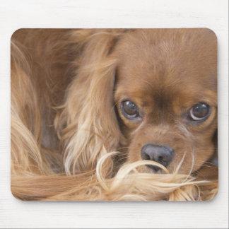 Perro de aguas de rey Charles arrogante de rubíes  Mousepads