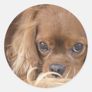 Perro de aguas de rey Charles arrogante de rubíes Etiqueta Redonda