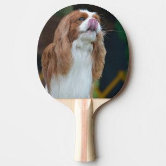 Perro de aguas de rey Charles arrogante dulce Pala De Tenis De Mesa