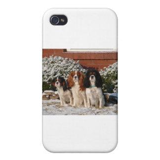 Perro de aguas de rey Charles arrogante iPhone 4 Carcasas