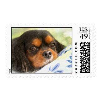 Perro de aguas de rey Charles arrogante pintado Timbres Postales